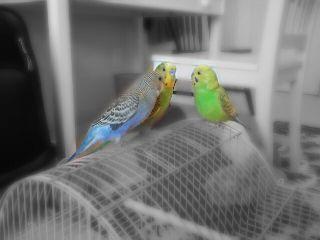 pets & animals cute