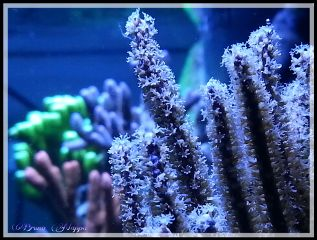 photography colorful macro coral pets & animals nature