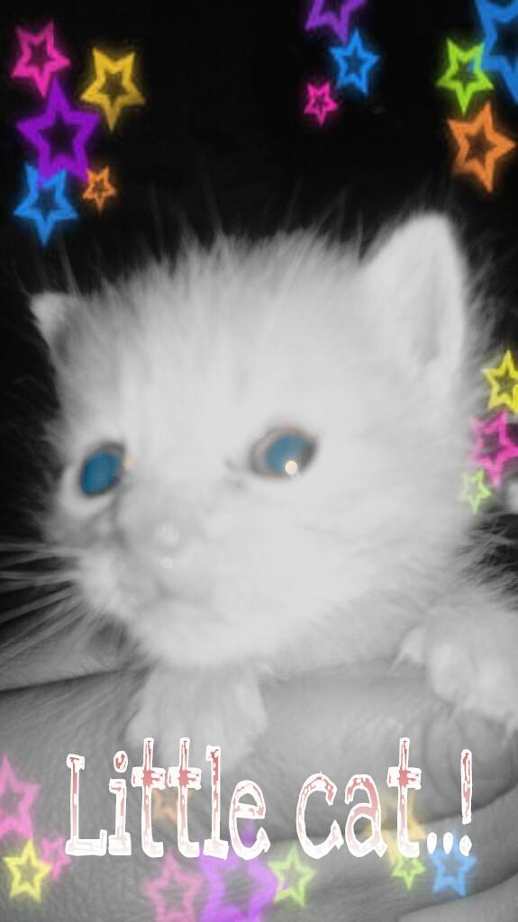 Mi lindo gatitoo..