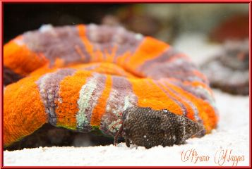 nature pets & animals colorful coral macro photography