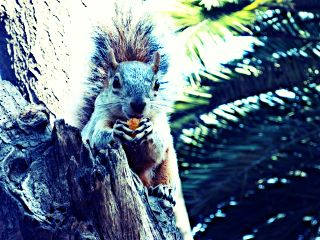 photography pets & animals nature chapultepec squirrel