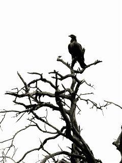 travel beauty photography black & white nature wildlife