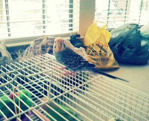 cute pets & animals birds photography