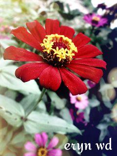 nature colorful flower bokeh