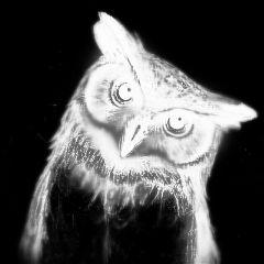 owl art instagram black and white edit soft