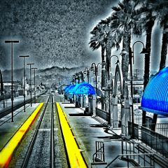 photography black & white color splash tree train
