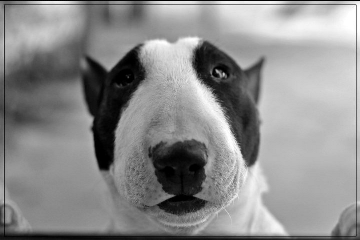 photography black & white pets & animals dog cute