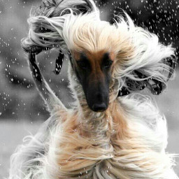 emotions photography pets & animals nature travel cute