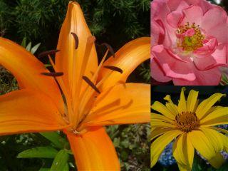 flower summer nature collage