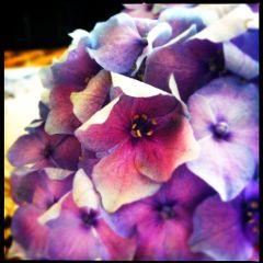 vintage retro flower cute colorful